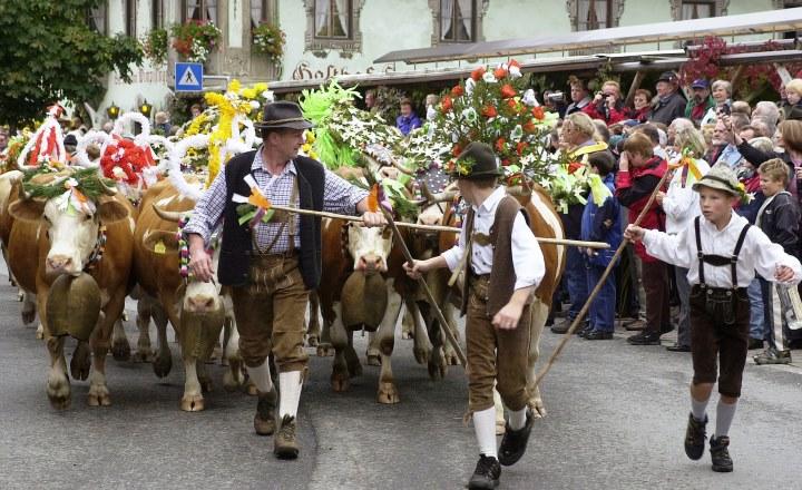 almabtrieb-koeien-door-straat-publiek