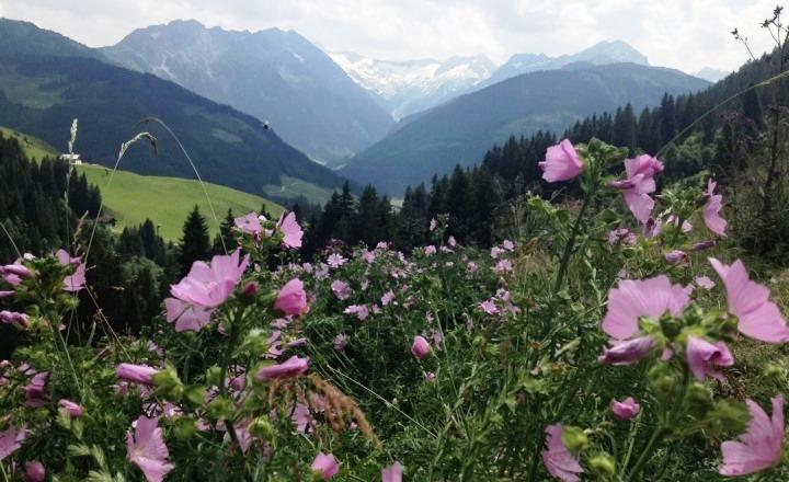 bloemen-bijen-alpen-bergen-groen-sneeuw
