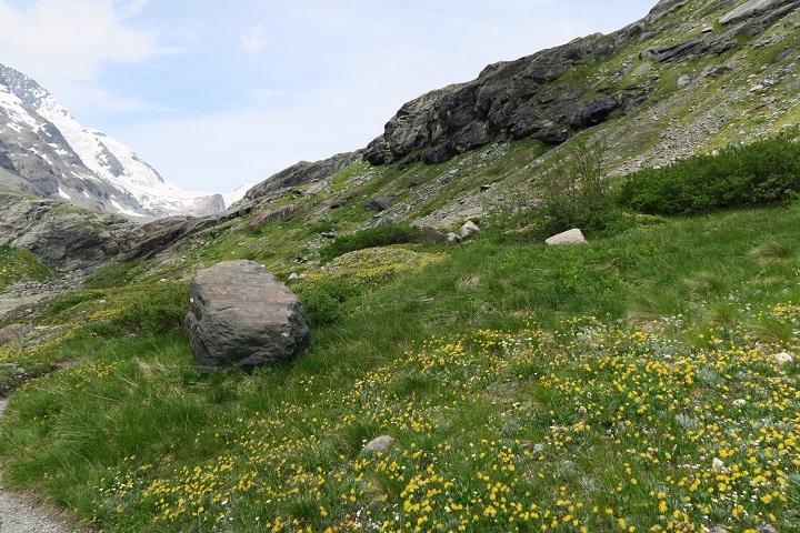 alpe-adria-trail-etappe-1-groene-weiden
