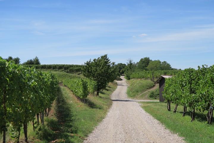 alpe-adria-trail-etappe-e30-wijnplantages