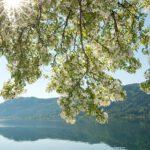 Ossiacher See: 5 must-do's tijdens je zomervakantie!