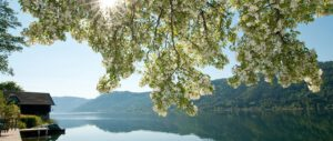 Bloesem bij meer in de bergen