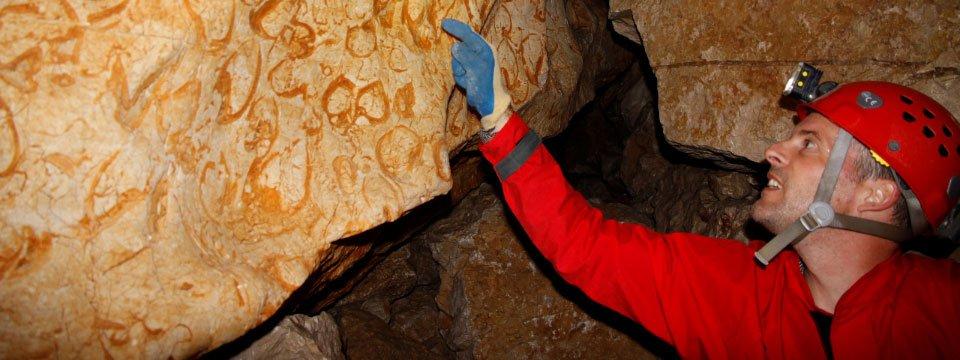De hartvormige fossielen op de muren van de karstgrot Srnica