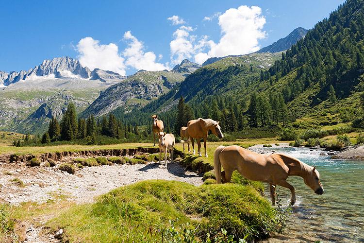 Het adembenemende landschap van Val di Sole