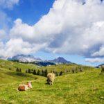 10 redenen voor een zomervakantie in de Alpen