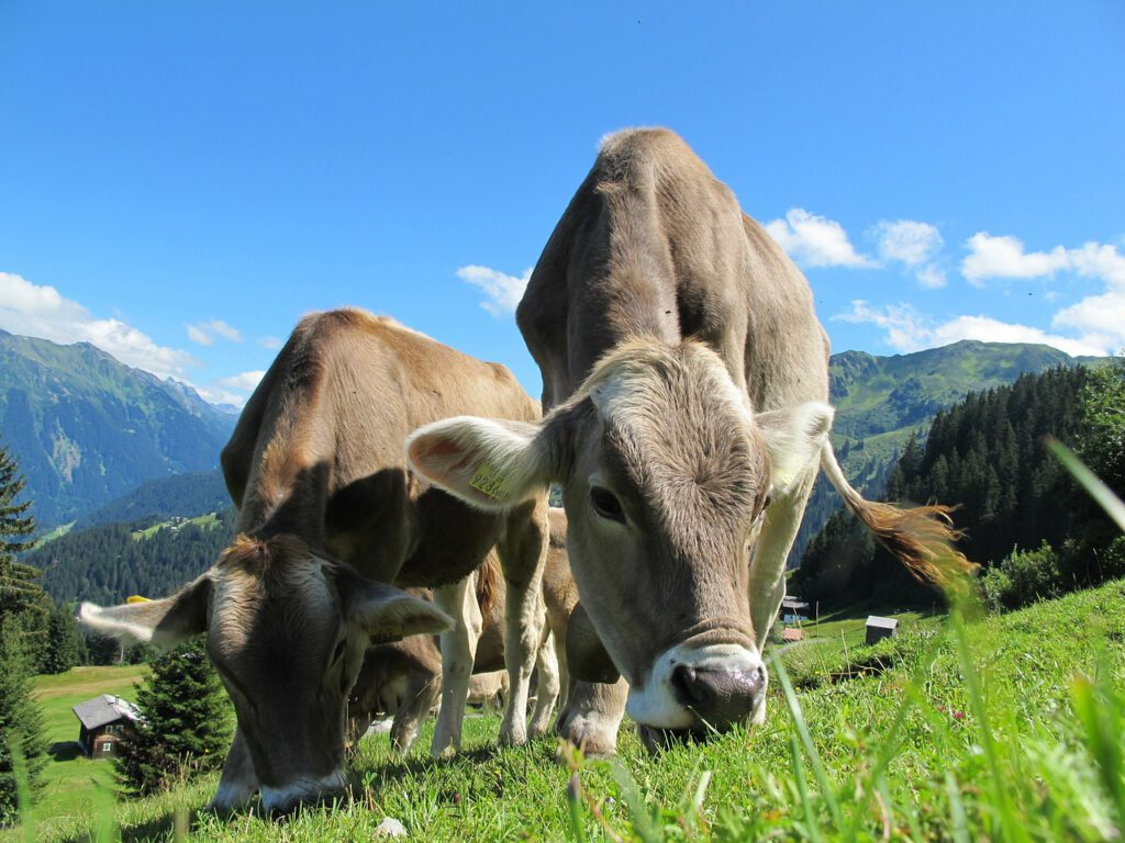 Dieren in de Alpen