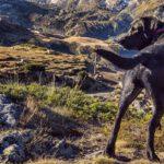 De Alpe Adria Trail wandelen met een hond