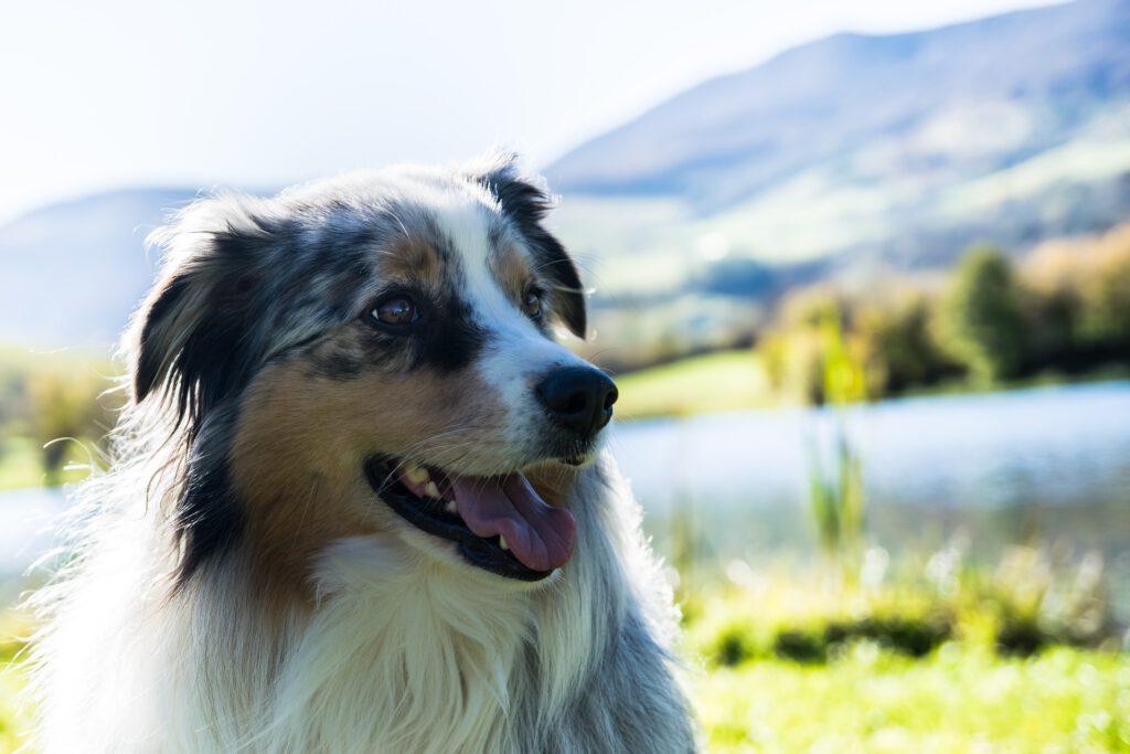 Portret van hond