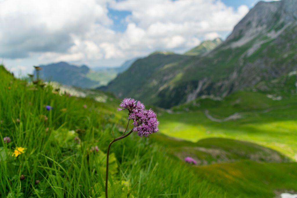 Bloem in de bergen