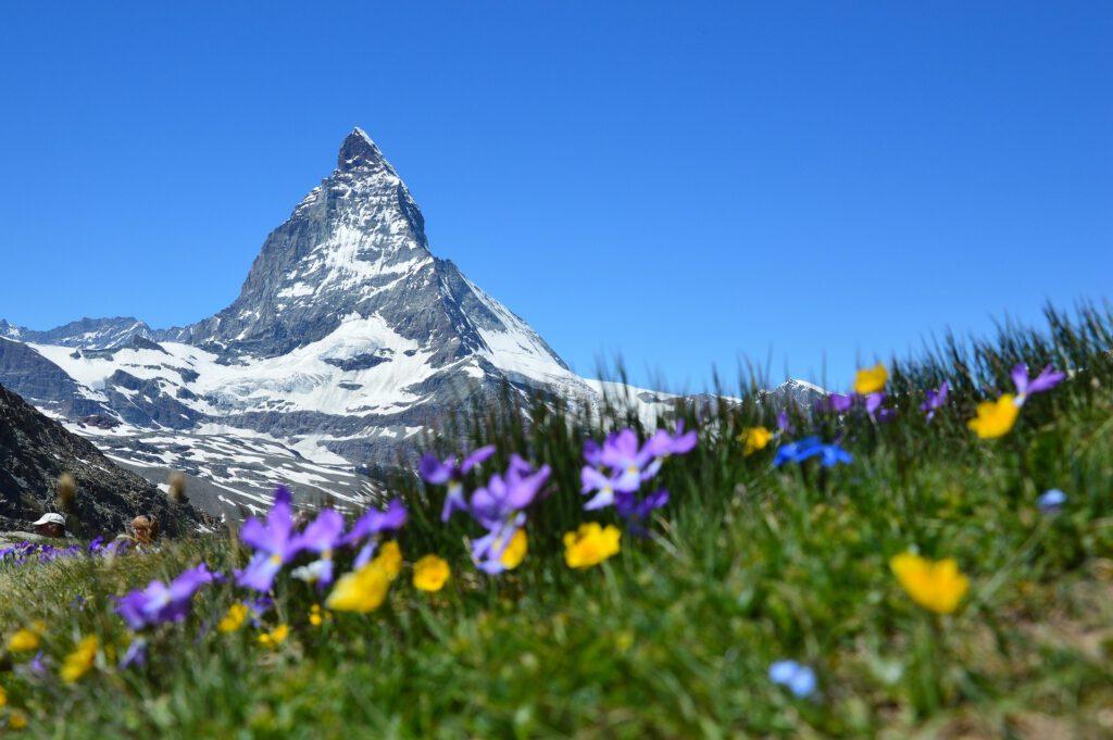 Berg met op voorgrond gras met bloemetjes