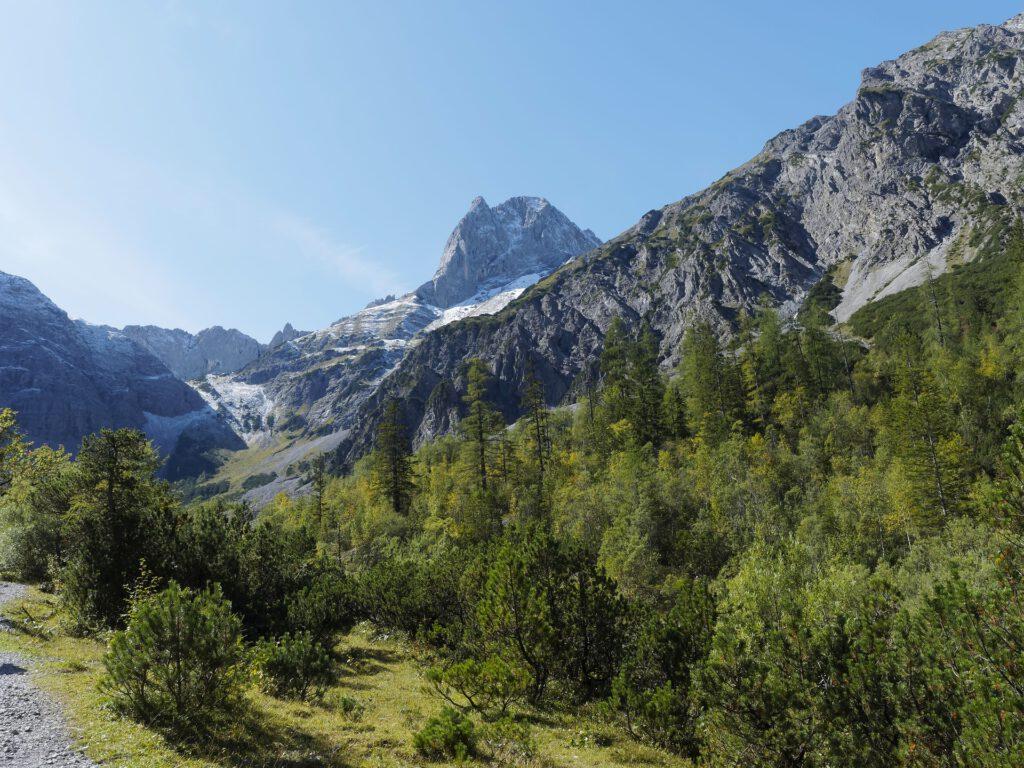 Berglandschap met bomen