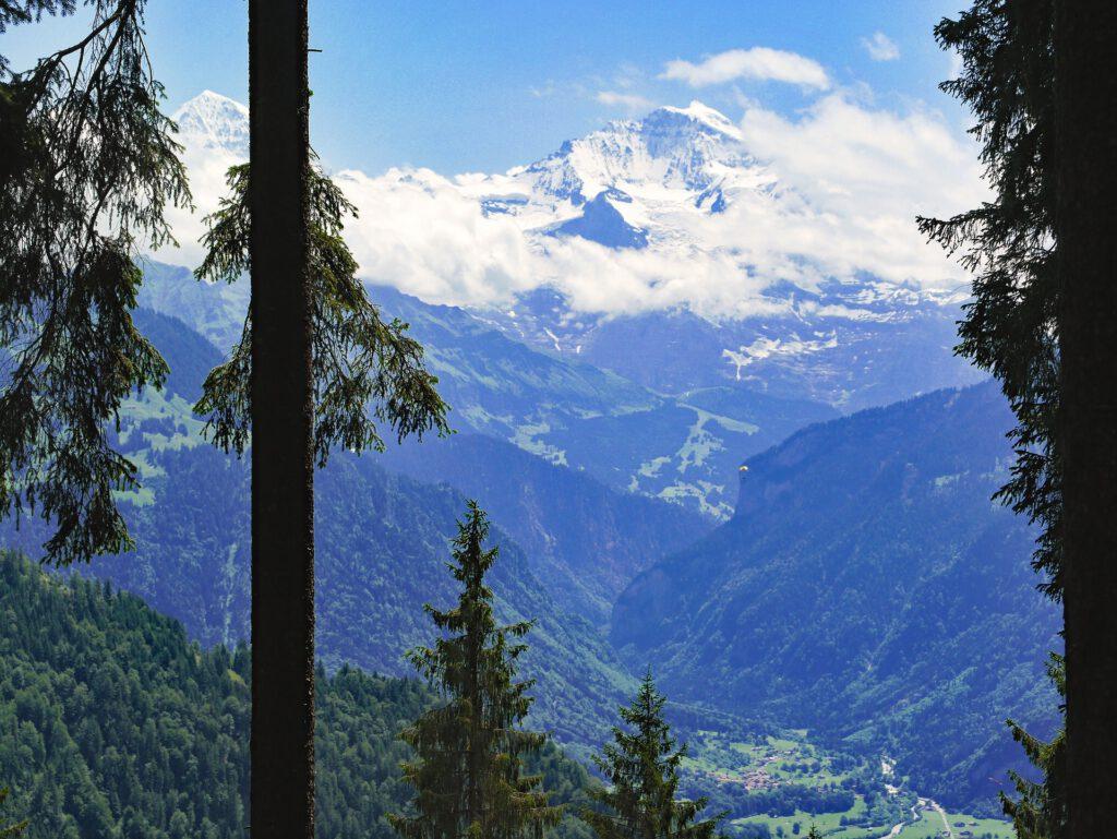 Uitzicht tussen bomen door op dal met bergen op achtergrond
