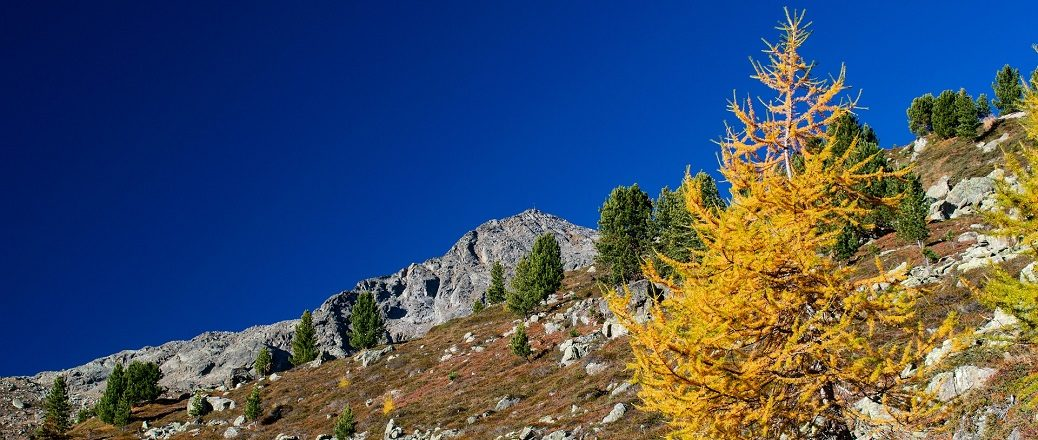 Alpen in de herfst