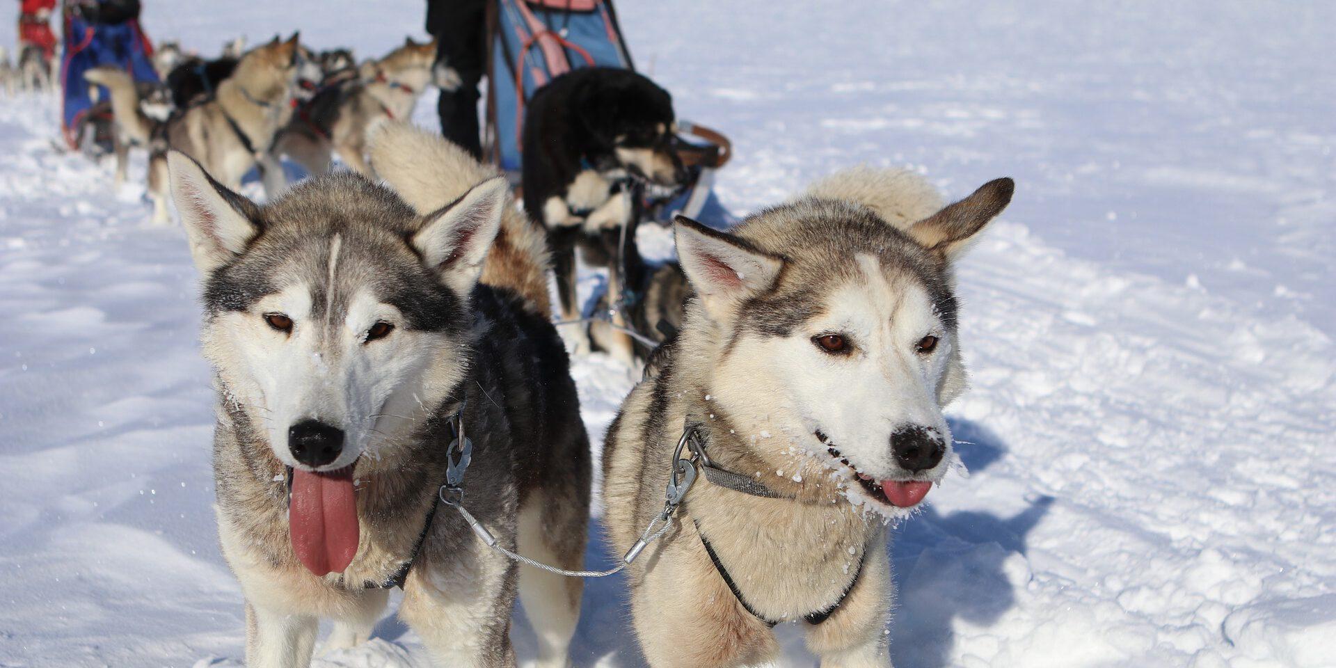 Alternatieve wintersporten in de Alpen