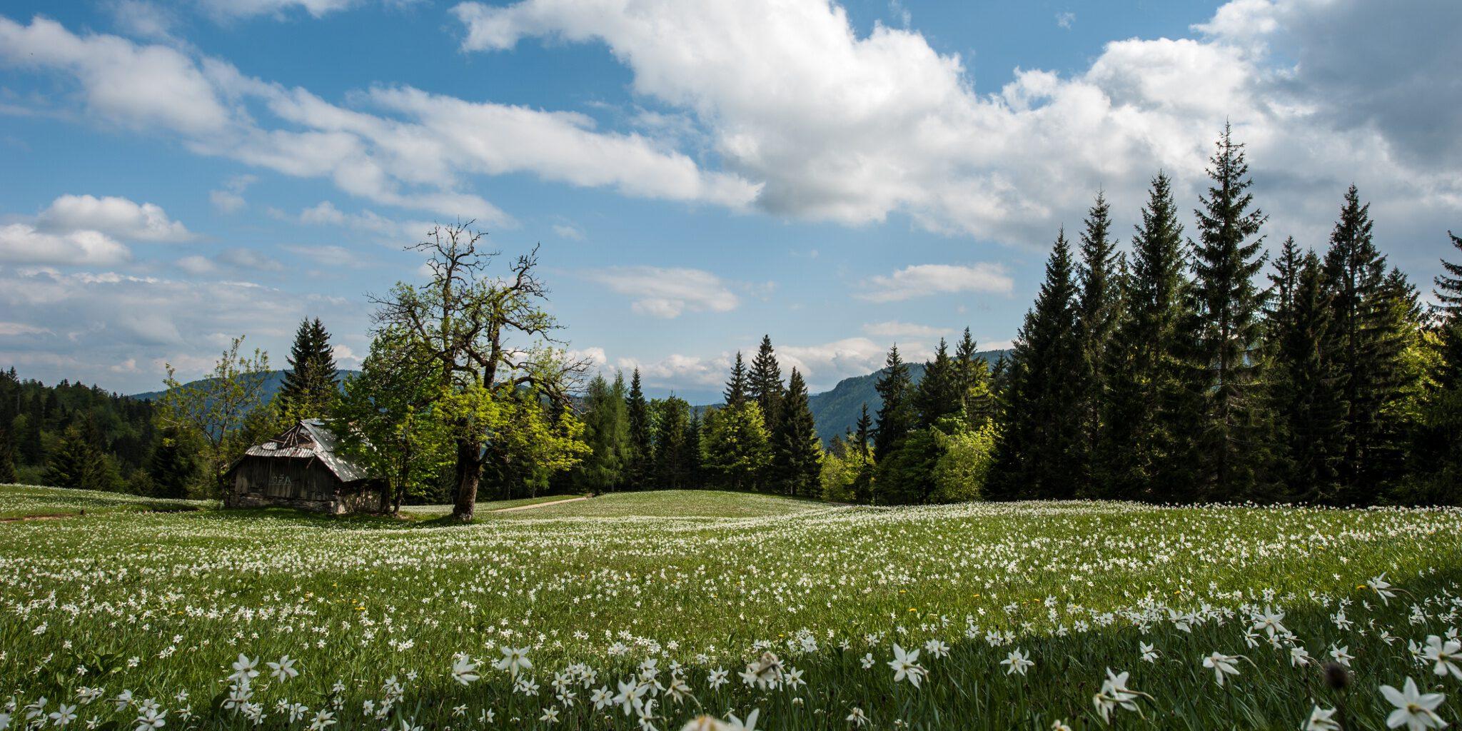 Juliana Trail Rogarjev Rovt