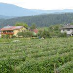 Etappe 21 Alpe Adria Trail: Velden naar Faaker See